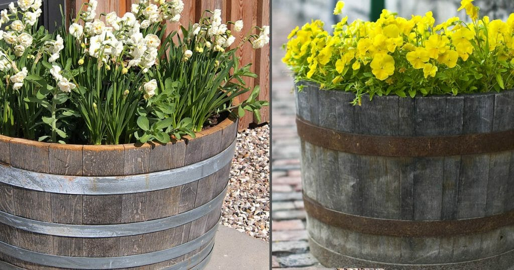 These quality wooden barrel planters are sourced directly from winreries in California and distilleries in Kentucky.